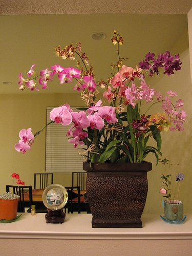 orchidea-szobaban