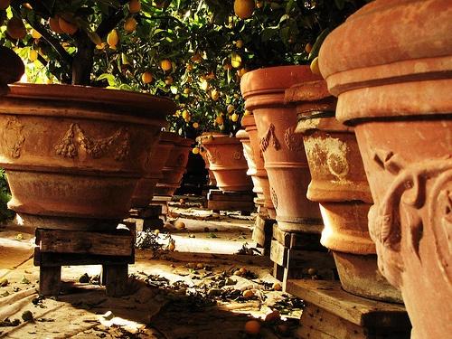 terrakotta-citromfak