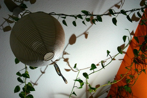 kuszonoveny-arnyek