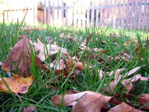 pazsit-lehullott-levelek