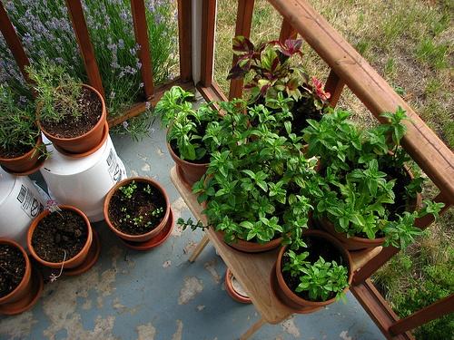 veranda-novenyek-termesztese