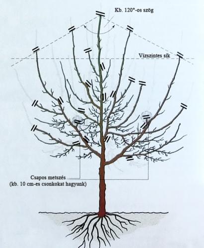 szilvafa-fenntarto-metszese