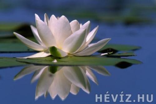 heviz2