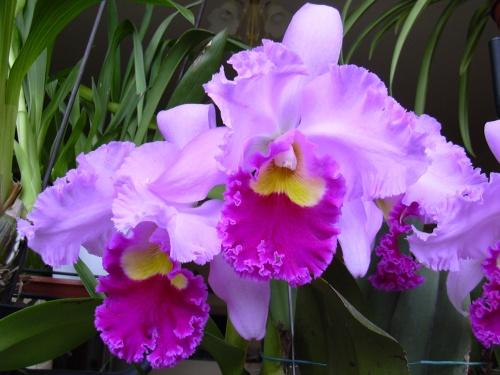2011._03._h-_orchidek_026