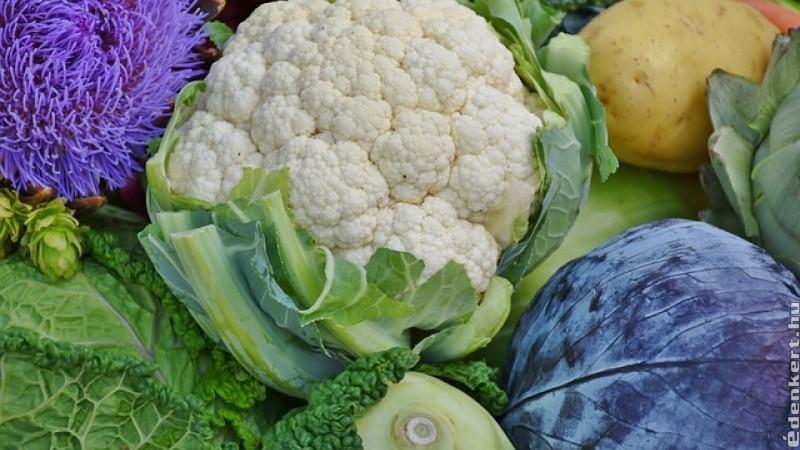 Káposztafélék - olcsó téli vitaminforrás
