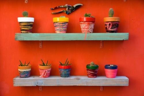kaktuszok-kontenerbe