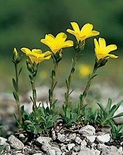 Védett növények, mi lesz veletek? Képgaléria