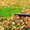 Őszi szívás a kertben