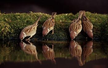 Ne zavard el: a veréb is madár, azért irigy és mohó!