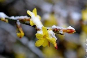 Enyhe télen meleg helyzet: mitől pusztulnak ki hirtelen a növényeink?