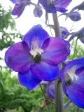 4 szépséges magasra növő évelő a virágágyba