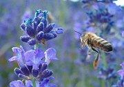 Miért legyünk jóban a méhekkel?