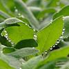 Hogyan lehet több tízezer növényt pár perc alatt meglocsolni?
