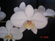 Akciós hulladékból orchidea
