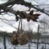 Téli lemosó permetezés a gyümölcsösben