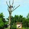 Hortobágyon működik Magyarország egyetlen madárkórháza