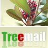 Treemail.hu: dísznövények postán