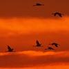 Kegyetlenül hat a klímaváltozás a vonuló madarakra