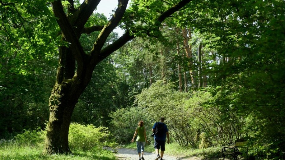 Hétvégi kirándulási tipp: Vácrátóti boranikus kert