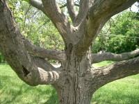 Több fát, kevesebb szemetet