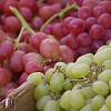 Piaci árak: 2007. augusztus 29. - Zuhan a csemegeszőlő ára