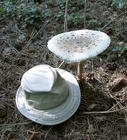 Ismered az erdei gombákat? Megtanítunk a legfontosabbakra!