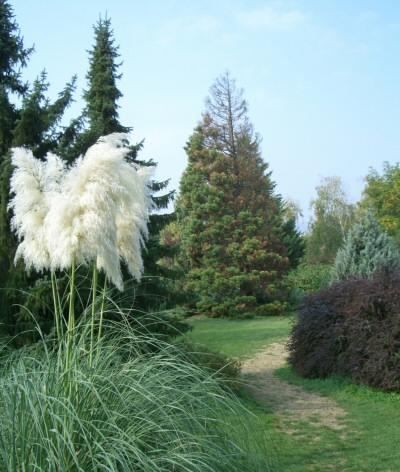 Ha majd a növények szétfeszítik a kerítésed, mit fogsz csinálni?