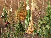 Lombikbébi-növények, zöldtetők, növénylegendák - Kutatók Éjszakája a Kertészeti Egyetemen