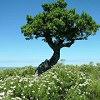 Októberben 100 db virághagymát nyerhetsz az Édenkert.hu fotójátékán