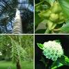 Az idétlen nevű vagy óriási növények elriasztják az embereket