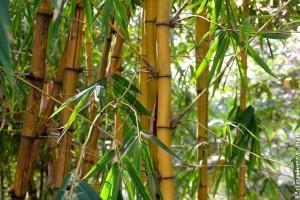 11 dolog, amit a bambuszról tudni kell!