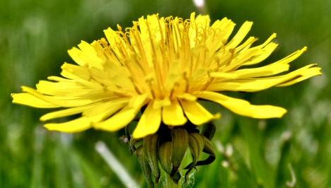 Emésztést serkentő gyógynövények
