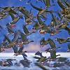 20 000 madár telel a tatai Öreg tavon - rekordra készül a Vadlúd sokadalom