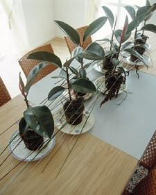Kiderült végre: azért vagy ideges, mert nincs elég növényed!