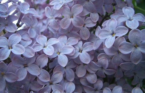 Az illatos virágcsokor jobb csábító