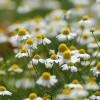 Szépség a kertből - természetes kozmetikumok