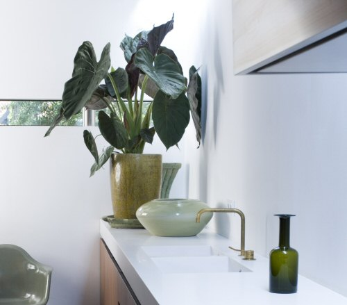 A dekoratőrök növény-kedvencei: lakás-stílusokat mutatunk