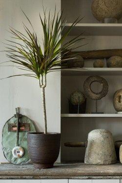 Kertépítész a lakásban: mire csábítanak a szobanövények?