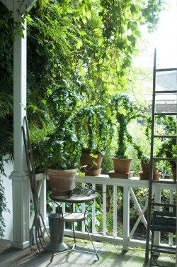 Szobanövényeket a kertbe: növeld meg a lakótered!