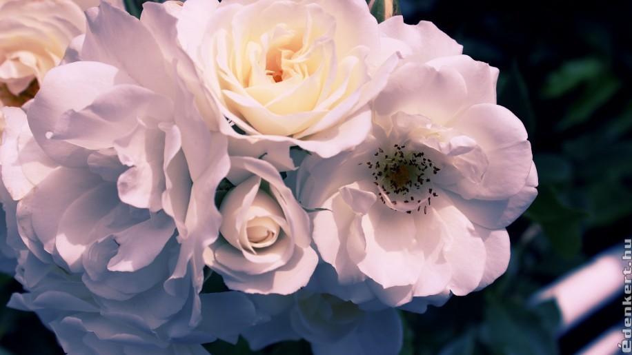 8 szobanövény, amit tavasszal kitehetünk a teraszra