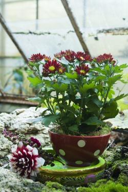 Szexi szobanövények, amelyek sok mindenre ráhangolnak