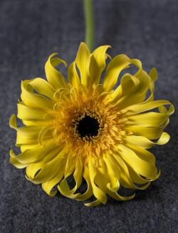 Tavaszi virágtrend képekben - színes szürke a nyerő