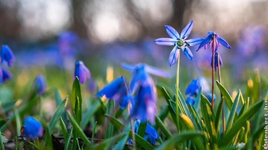 A legkorábbi virágok tavasszal