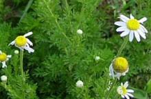 Gyomhatározó: tavaszi gyomok - időben felismered őket?