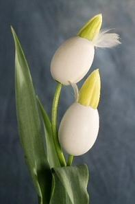 Húsvéti üdvözlet virágokkal!