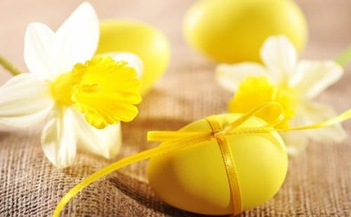 Húsvéti nárcisz
