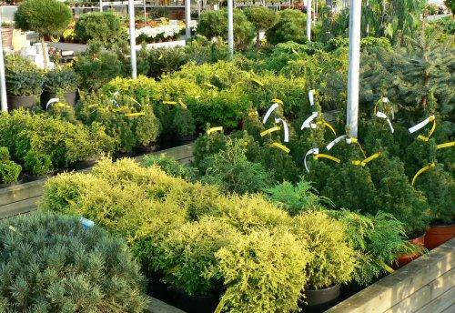 3 tipp az  egészséges növényválasztáshoz! Videó!