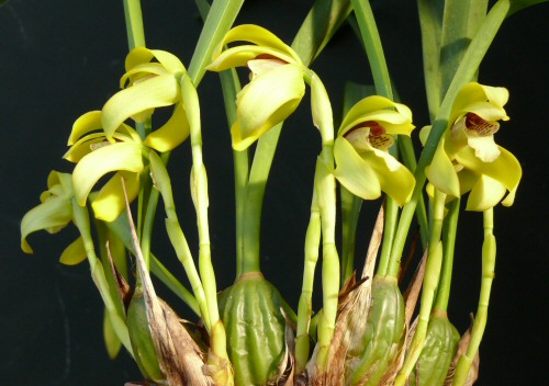 Orchidea- és Bromélia Kiállítás a reneszánsz jegyében