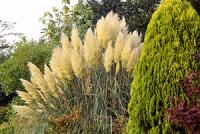 A kerti díszfüvek ábécéje - gondozási ötletekkel