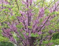 Tervezz kertet: pad az árnyas fa alatt